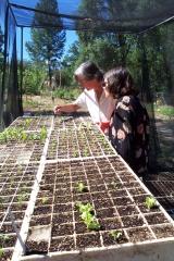 Alice showing seedlings