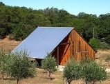 Barn and trees at Amador Olive Oil