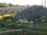 DAMAS Vineyard in Spring