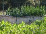 DAMAS Spring Garden