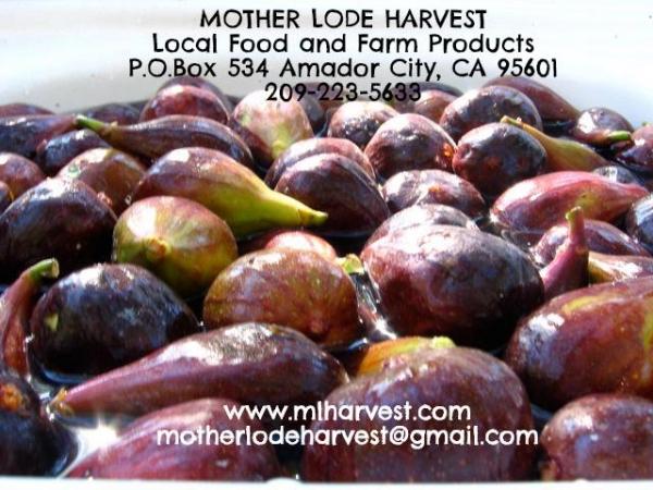 Paloma Pollinators Figs