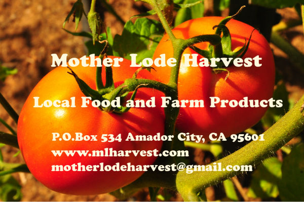 Tomatoes from Harmony Hill