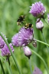 Paloma Pollinators' Pollinator