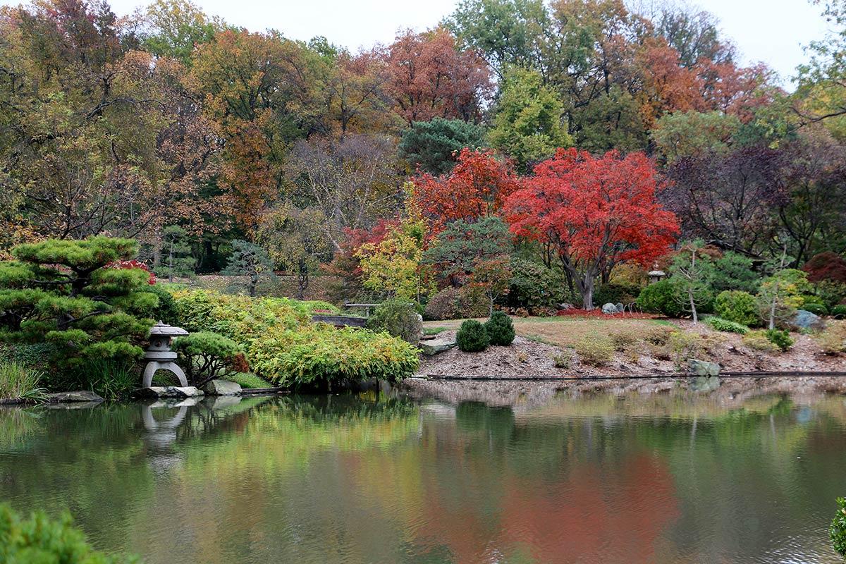 Fall Foliage at Japanese Garden