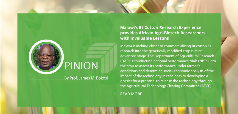 Malawi's Bt Cotton Research Experience provides African Agri-Biotech Researchers with Invaluable Lessons