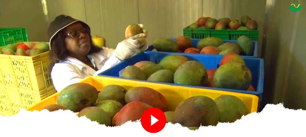 Postharvest Management: From Lab to Land