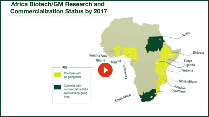 Status of GM Research and Commercialization in Africa 2017