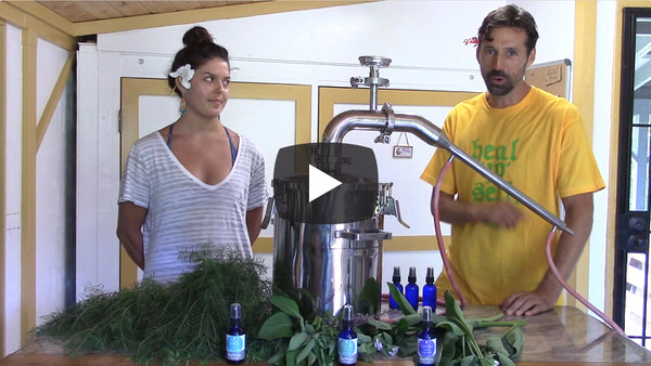 Making Hydrosols at Kauai Farmacy with Dan McDonald