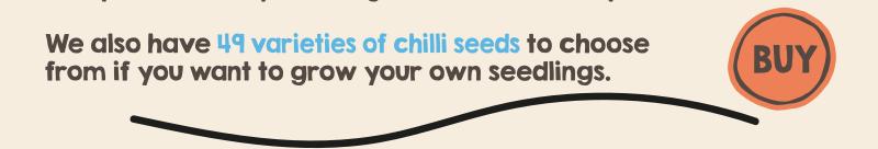 DIY Chilli Oil Kit