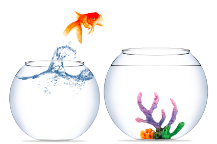 Goldfish jumping to a new bowl