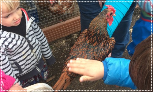 Children collecting eggs & handling a hen at a farm