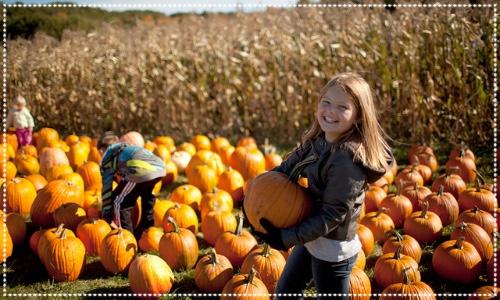 Pumpkin Patch in Brocksushes Farm, Corbridge