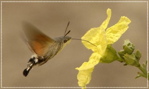 Pollinator Day, Kew