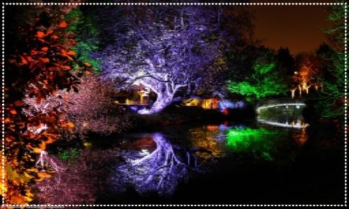 Soon Park - Enchanted Woodland