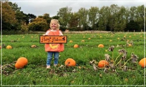 Pumpkins at Doddington Hall