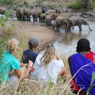 Karisia Elephants