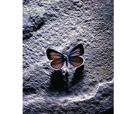 Butterfly and Shadow by John Hedgecoe