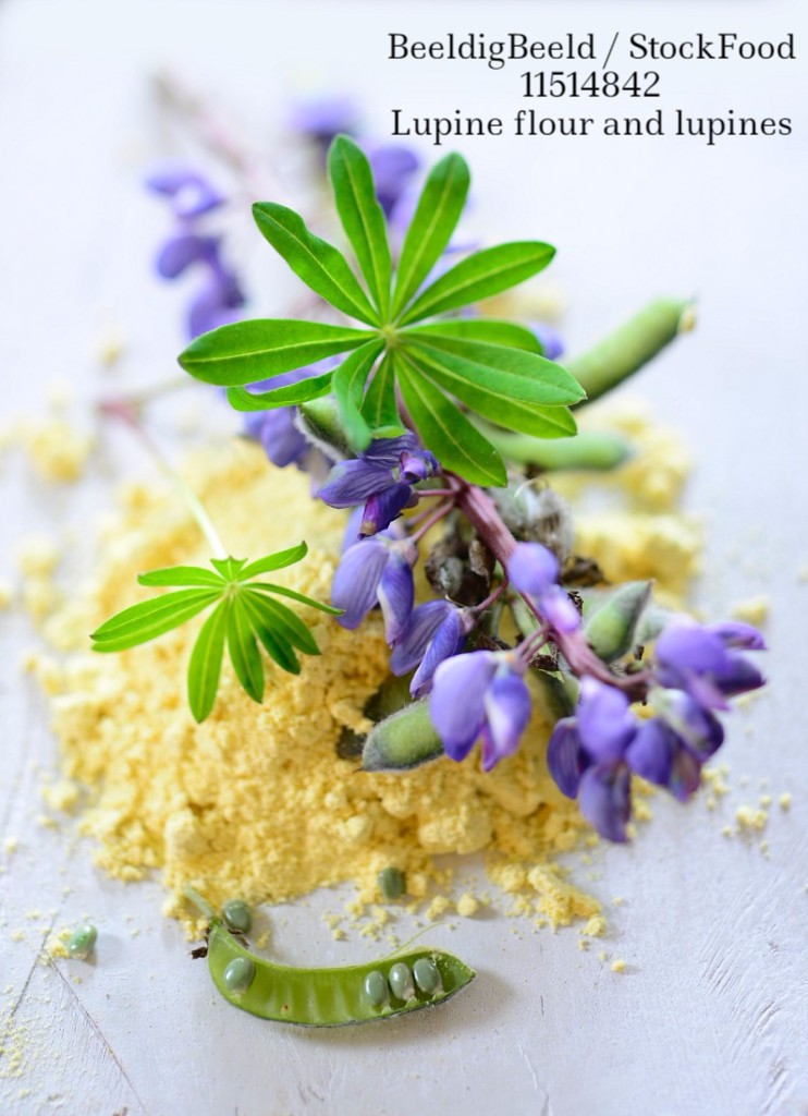 11514842 Lupine flour and lupines