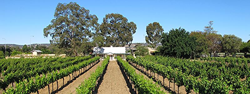 Organic Winery - Western Australia