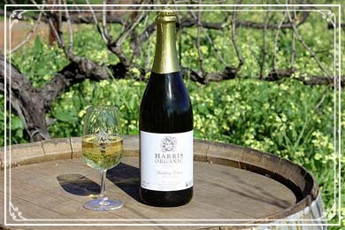 Organic Sparkling Champagne