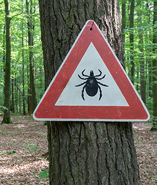 A warning sign with a tick symbol in it on a tree in woodland