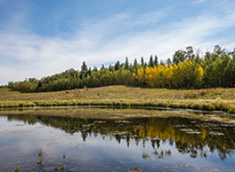 The Beaver Hills area, AB (Photo by Brent Calver)