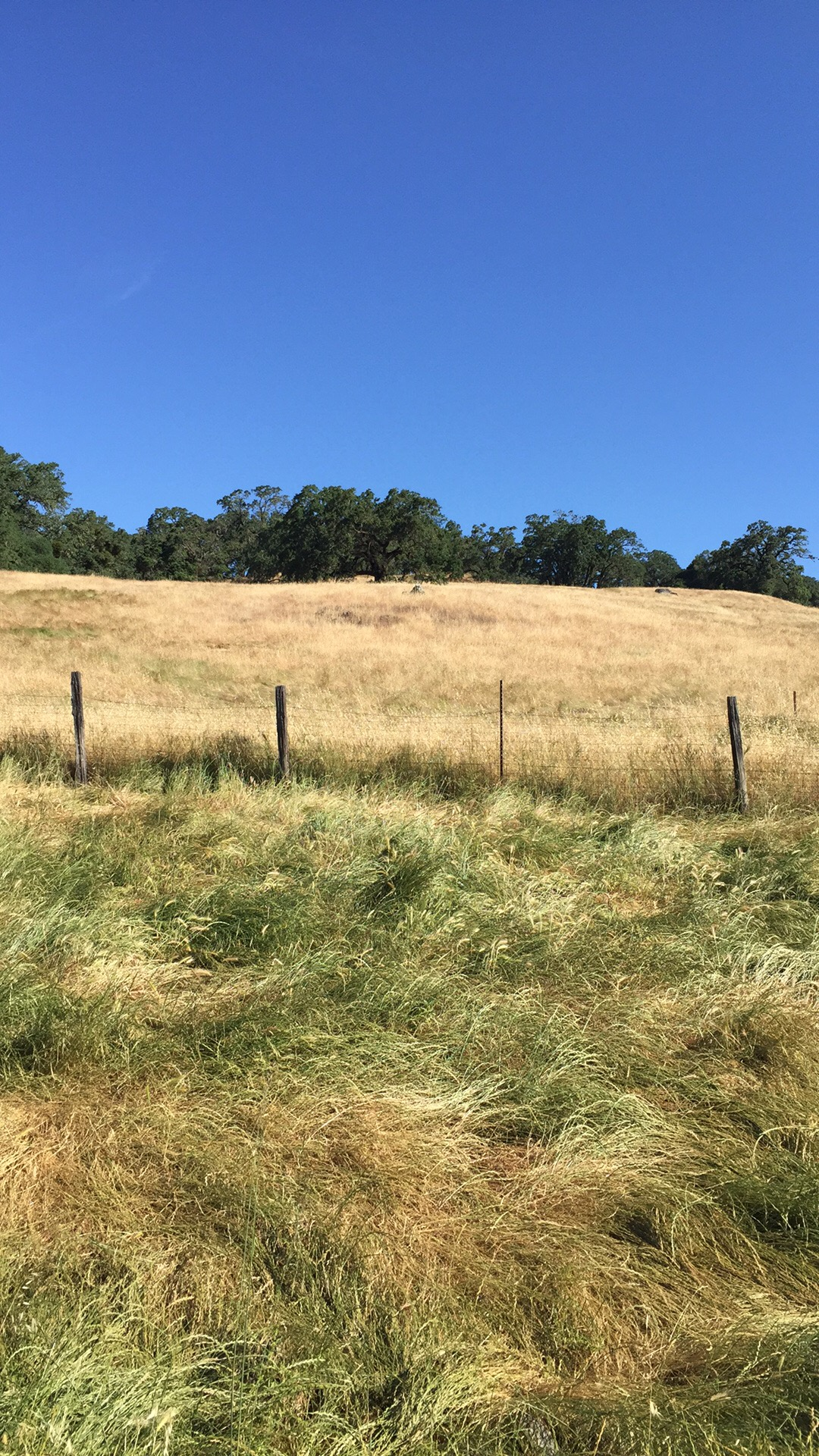 Grazed versus ungrazed pasture