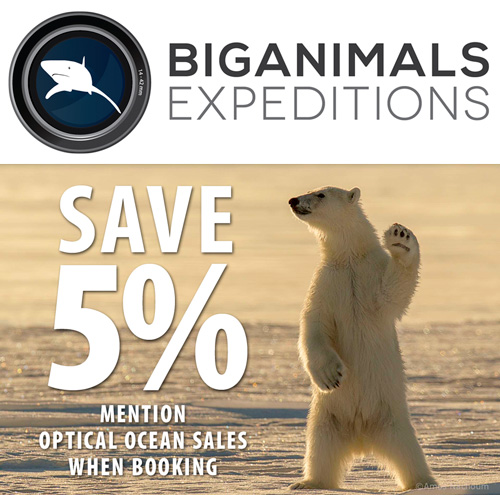 Save 5% on BigAnimals Expeditions