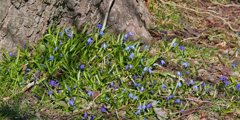 Spring in Osprey Valley