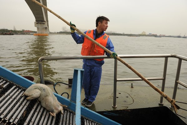 Thousands of Dead Pigs Found in River Flowing Into Shanghai