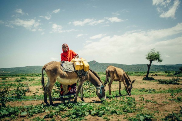 Photo of Ethiopian woman loading plastic water containers on a donkey.