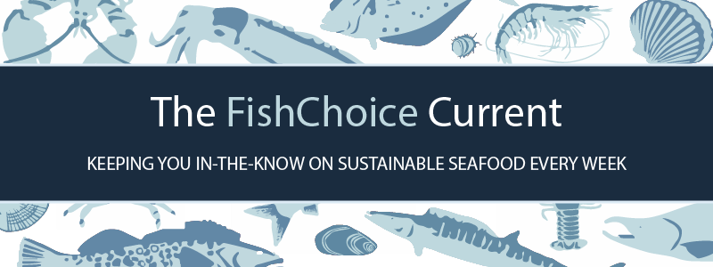The FishChoice Current