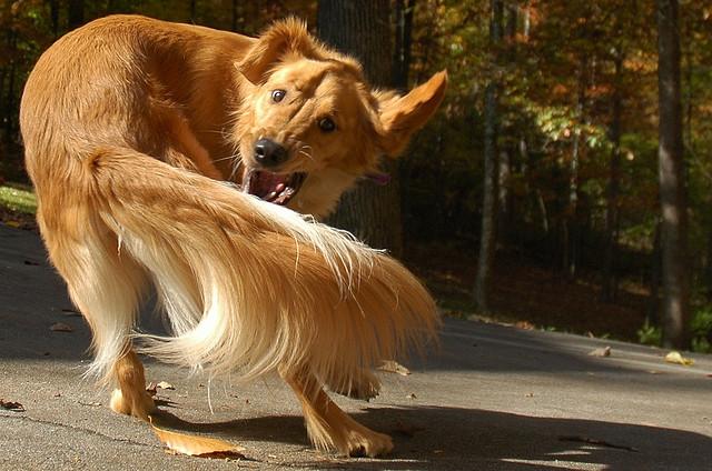 [A tail I like]