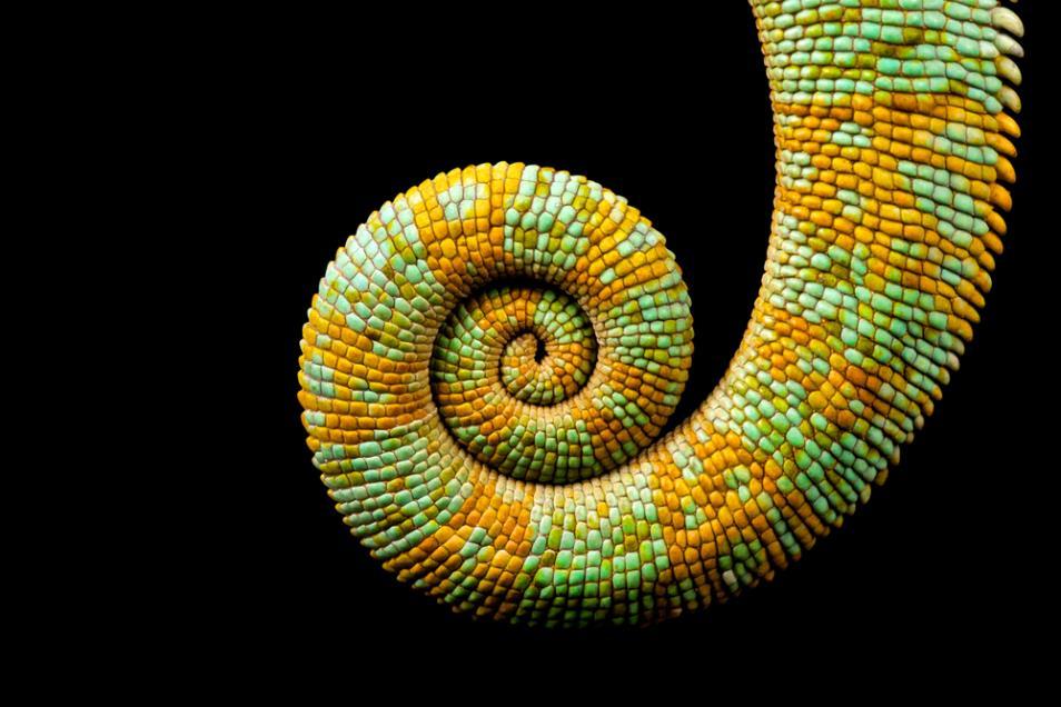 [Image of a tail I like]
