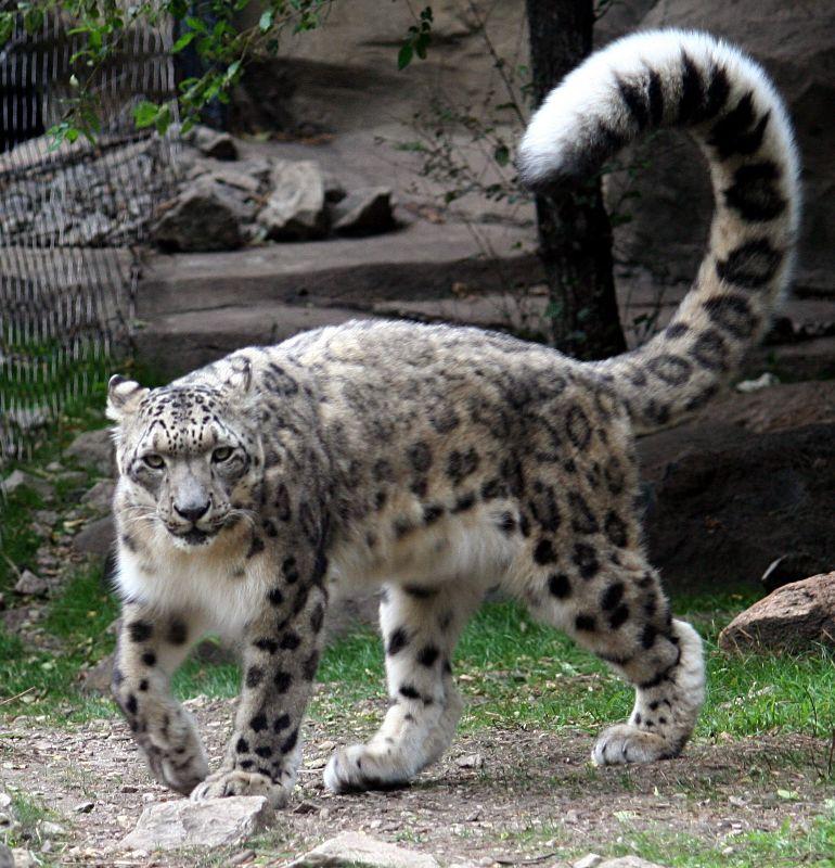[I tail I like]