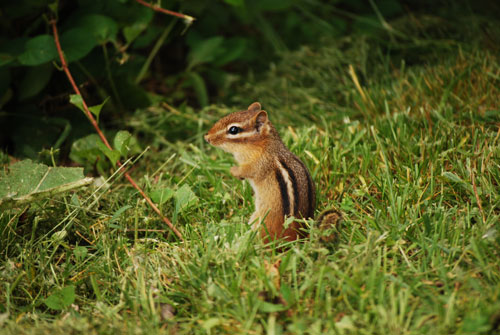 Scavenger Hunt at Allison Park! Chipmunk photo by Amaury Fournier.