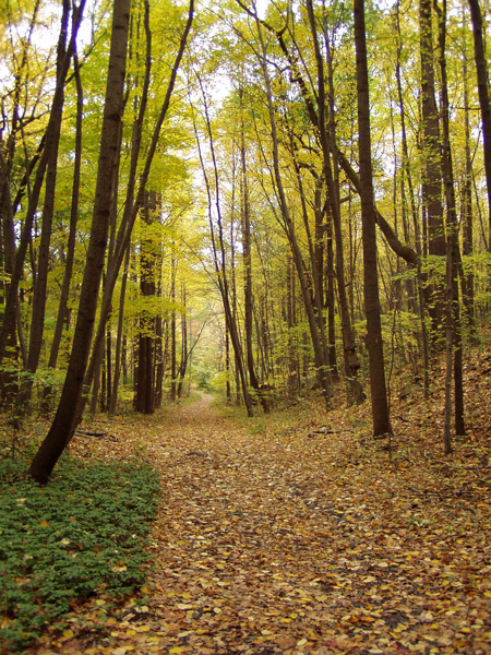 Greenbrook trails in fall. Photo by Ken Habermann.