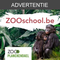 Beestige leerstof van ZOOschool.be
