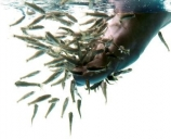 fish spa in ijsselstein