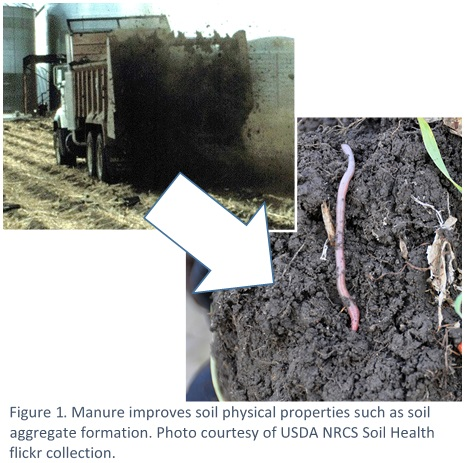 Manure Improves soil physical properties
