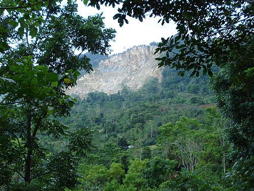 South American jungle
