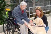 kerekesszékes idős asszony kutyával