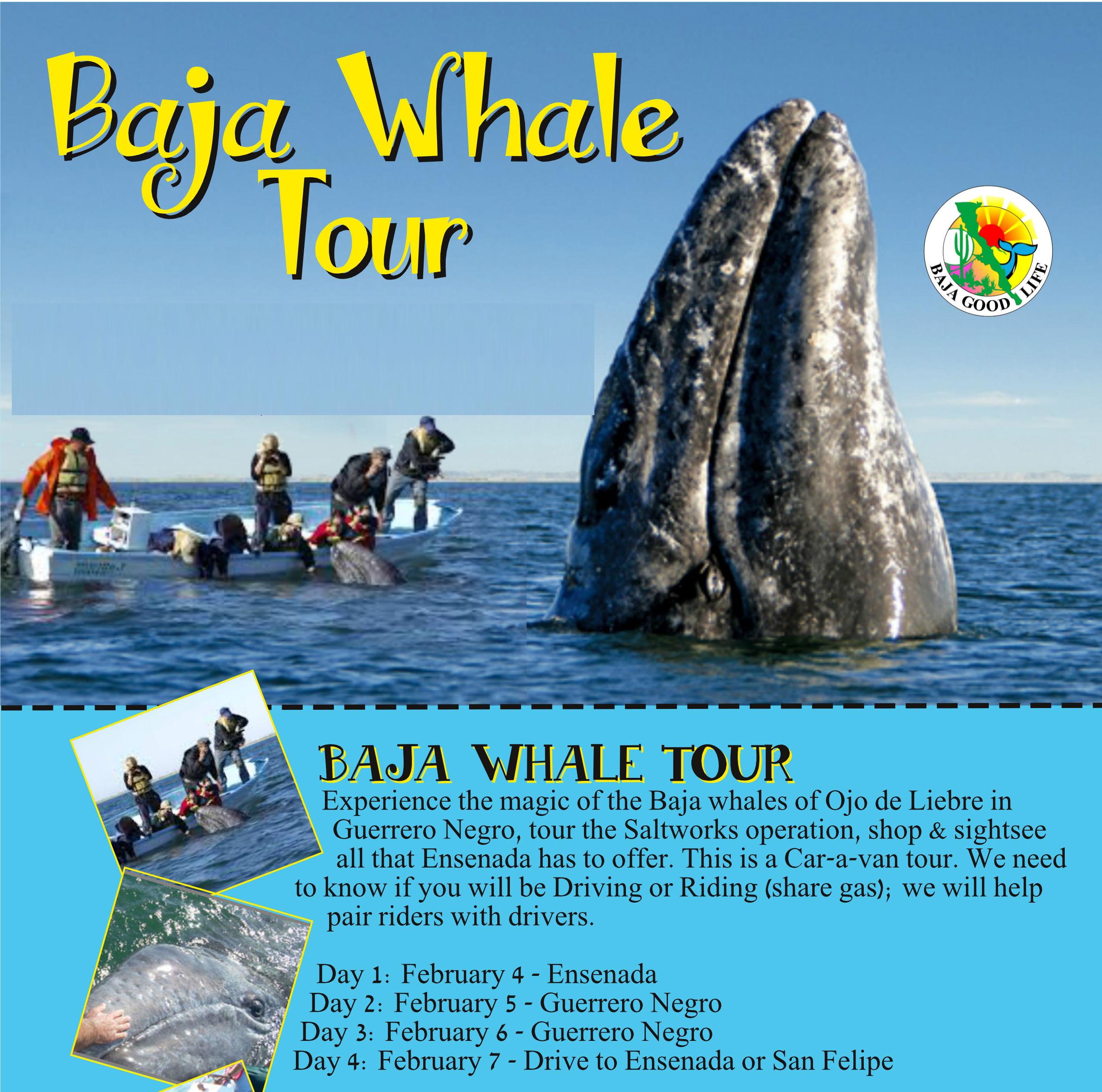BGLC Whale Tour
