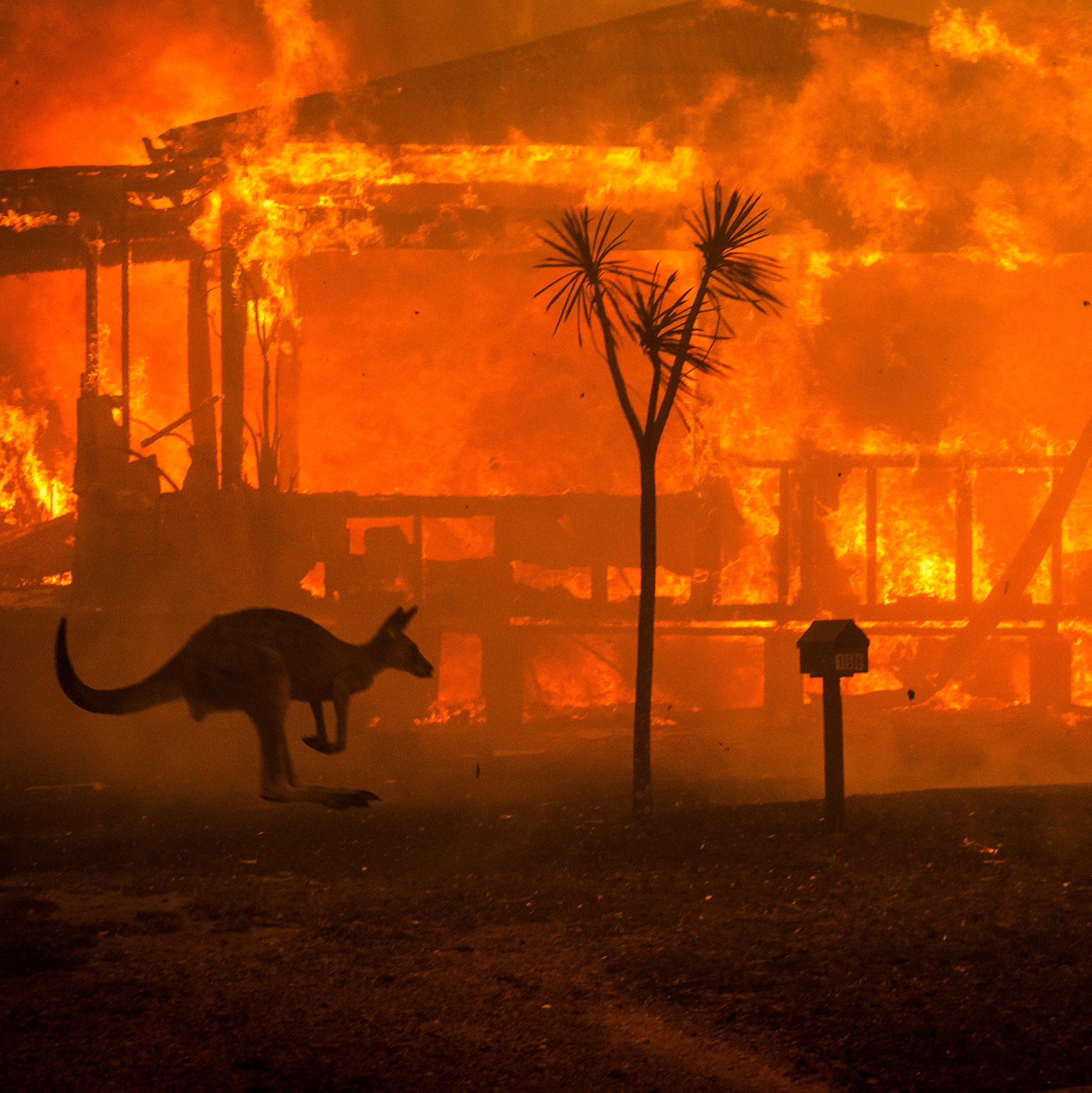 Australian Bushfires - January 2020