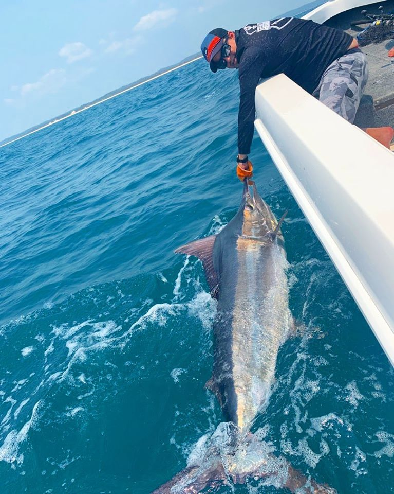 This black marlin went 55kg a great fish for inside waters