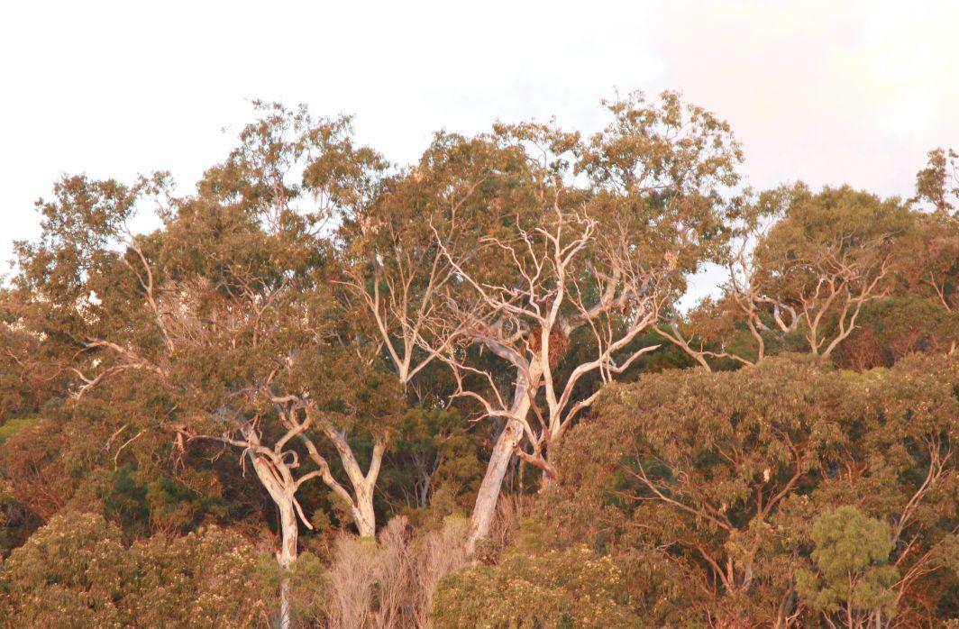 Sea Eagle Nest North Arch Cliffs