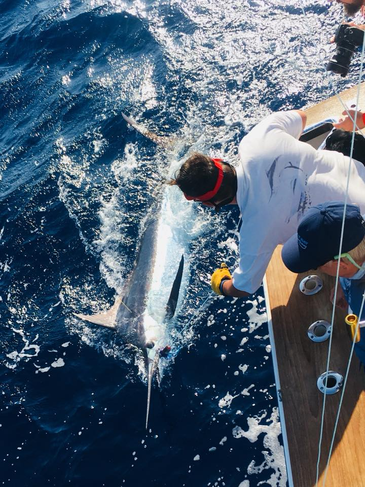 One of Don's Blue marlin caught on board Mistress