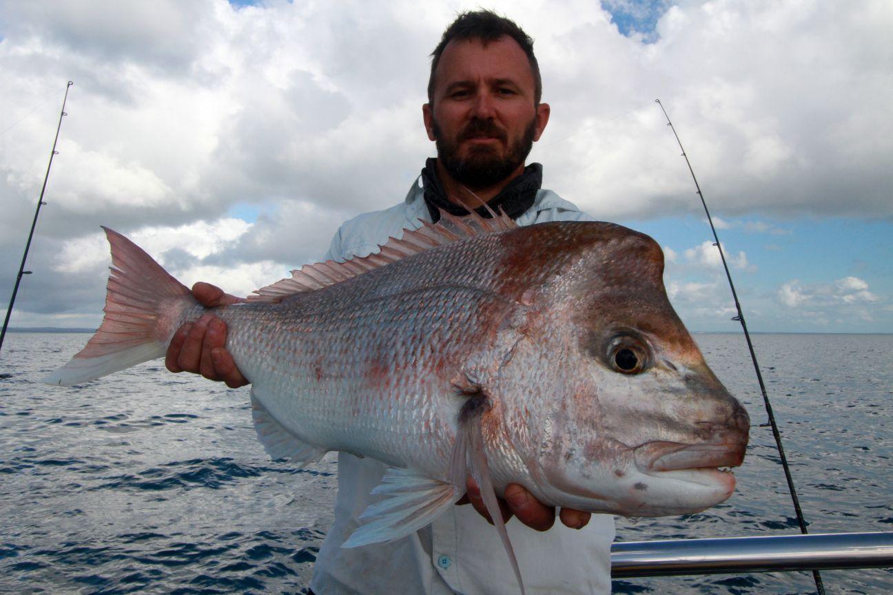 Snapper a great Aussie sportfish