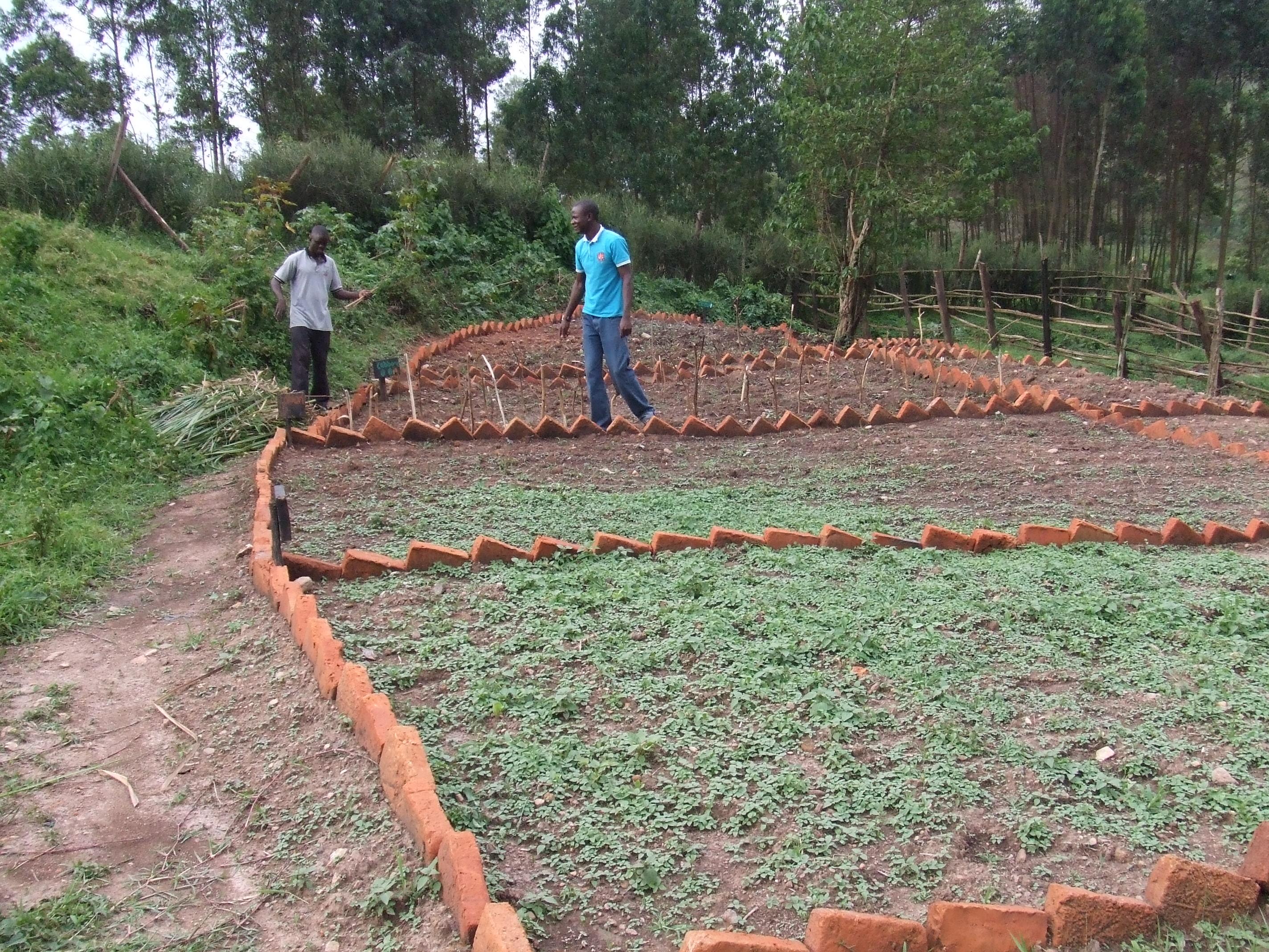 Demo Vegetable Garden
