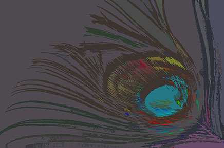 Illustration of a peacock feather against a dark gray background